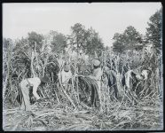First ribbon cane molasses, cherted road and cotton mill were started by these men in Greensboro, Alabama