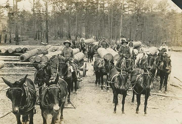 PATRON + Tuscumbia, Alabama – Prominent Businessmen in 1890 - PART IV