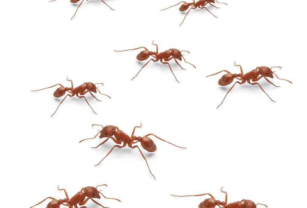 PATRON + SATURDAY SECRETS – A unique Ant Trap from 1887
