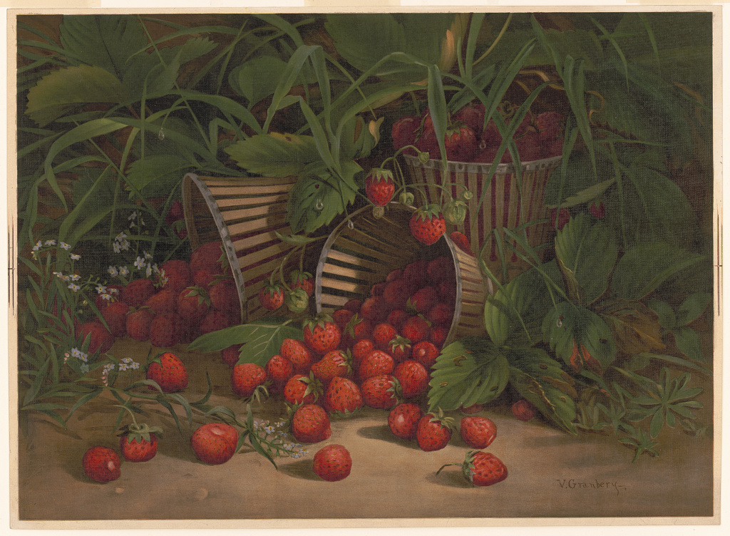PATRON + SATURDAY SECRETS – Strawberries and Raspberries tips from 1908